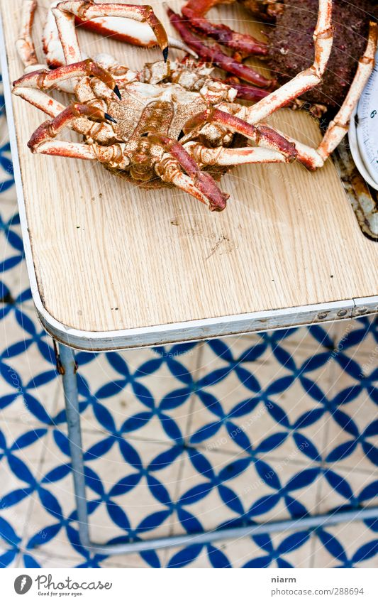 Mr Crabs sein Ende Hafen Fischmarkt Markt Angeln exotisch Meer Nutztier Totes Tier Krabbe Meeresfrüchte Hummer Seespinne kaufen krabbeln Farbfoto Außenaufnahme