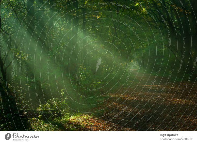 Lichtwerk Natur Pflanze Baum Blatt Landschaft Wald Umwelt Wege & Pfade Luft Klima Schönes Wetter Hoffnung Inspiration Waldboden Waldlichtung Lichteinfall
