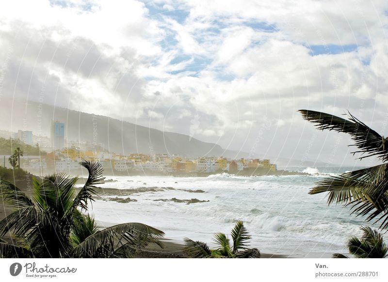 Puerto de la Cruz² Ferien & Urlaub & Reisen Strand Landschaft Wasser Himmel Wolken Baum exotisch Palme Wellen Küste Meer Atlantik Teneriffa Stadt Skyline Haus