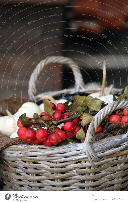 ein Korb voll Herbst harmonisch Innenarchitektur Natur Pflanze Winter Garten Schalen & Schüsseln Dekoration & Verzierung Kitsch Krimskrams schön braun rot weiß