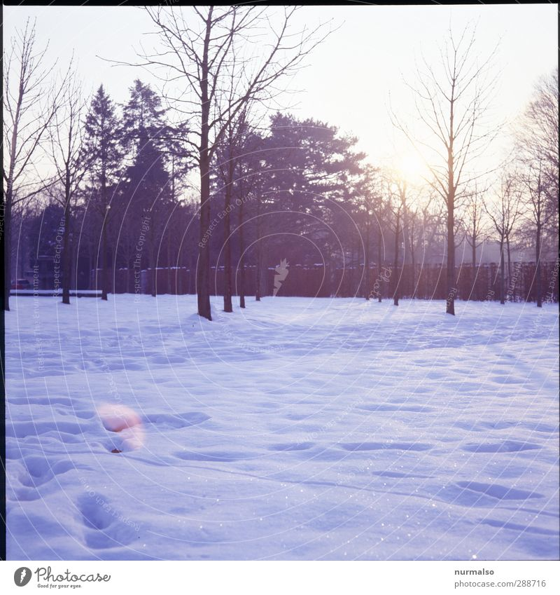 Winter 13122012 Natur Pflanze Baum Erholung Landschaft Freude Tier Winter Wald kalt Umwelt Schnee Glück Garten Kunst Eis