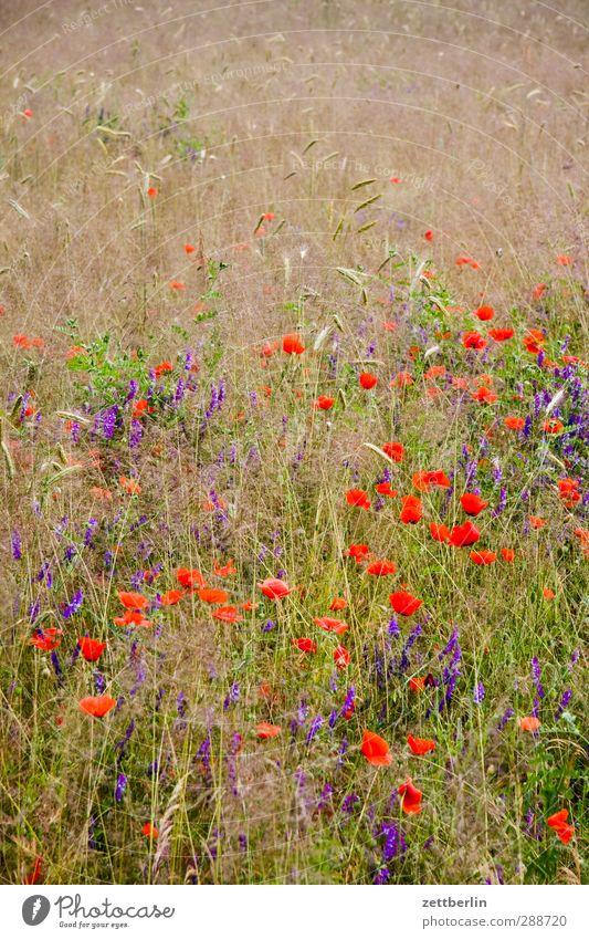 Blumen und so Umwelt Natur Landschaft Pflanze Sommer Klima Klimawandel Wetter Schönes Wetter Nutzpflanze Garten Wiese Feld gut schön Freude Zufriedenheit