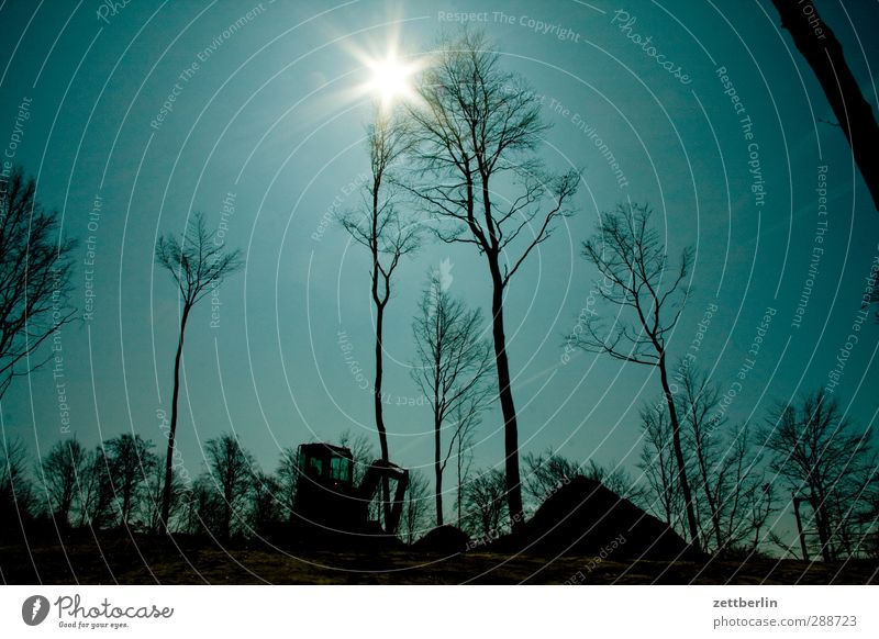 Sonne und Bäume Umwelt Natur Landschaft Himmel Wolkenloser Himmel Horizont Sonnenlicht Frühling Winter Klima Klimawandel Wetter Schönes Wetter Pflanze Baum Park