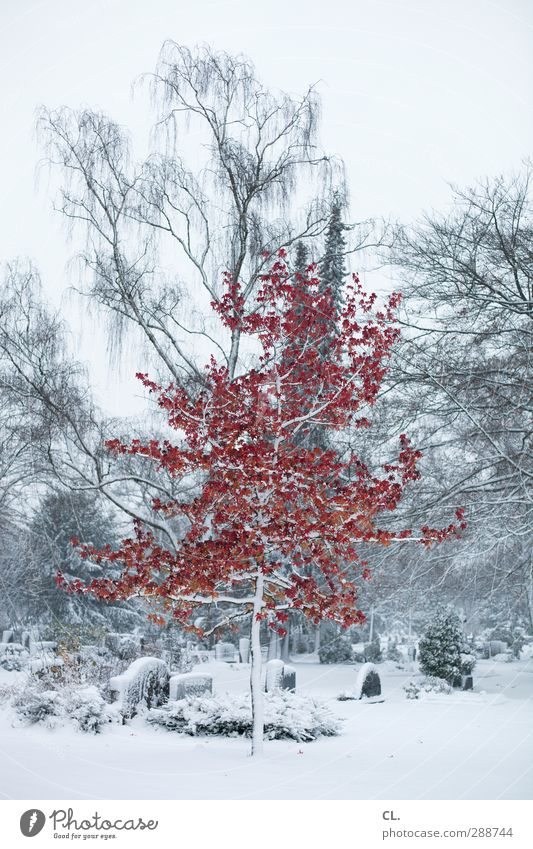sonderling Natur schön weiß Baum rot Winter Landschaft Umwelt kalt Schnee Tod Traurigkeit Religion & Glaube Schneefall Eis außergewöhnlich