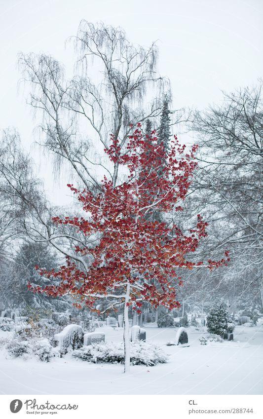 sonderling Umwelt Natur Landschaft Winter Klima Klimawandel Eis Frost Schnee Schneefall Baum außergewöhnlich rot weiß schön Glaube kalt Religion & Glaube Tod