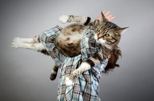 Junge mit der Katze Kind Freundschaft 3-8 Jahre Kindheit Tier Haustier Tiergesicht 1 festhalten glänzend hängen Blick Spielen tragen dick frech Zusammensein