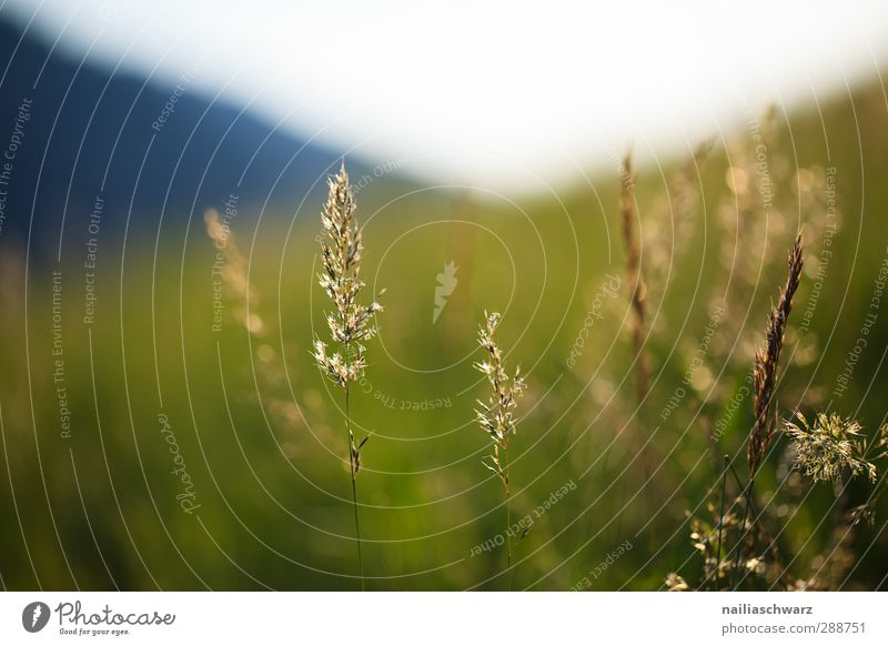 Abend Natur blau grün schön Sommer Pflanze ruhig Landschaft Erholung Umwelt Wiese Wärme Berge u. Gebirge Leben Gras grau