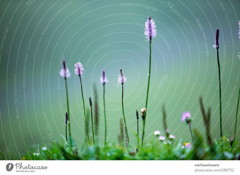 Blütezeit Natur blau grün schön Sommer Pflanze Blume Blatt Umwelt Wiese Leben Gras Garten natürlich Park