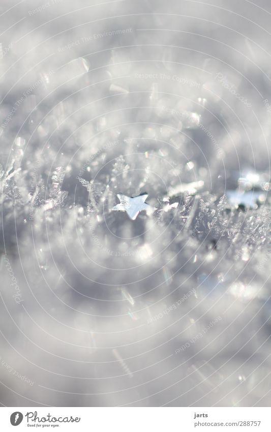 schneestern Winter Eis Frost Schnee glänzend Hoffnung Wunsch Weihnachten & Advent Stern (Symbol) Farbfoto Außenaufnahme Nahaufnahme Detailaufnahme Makroaufnahme