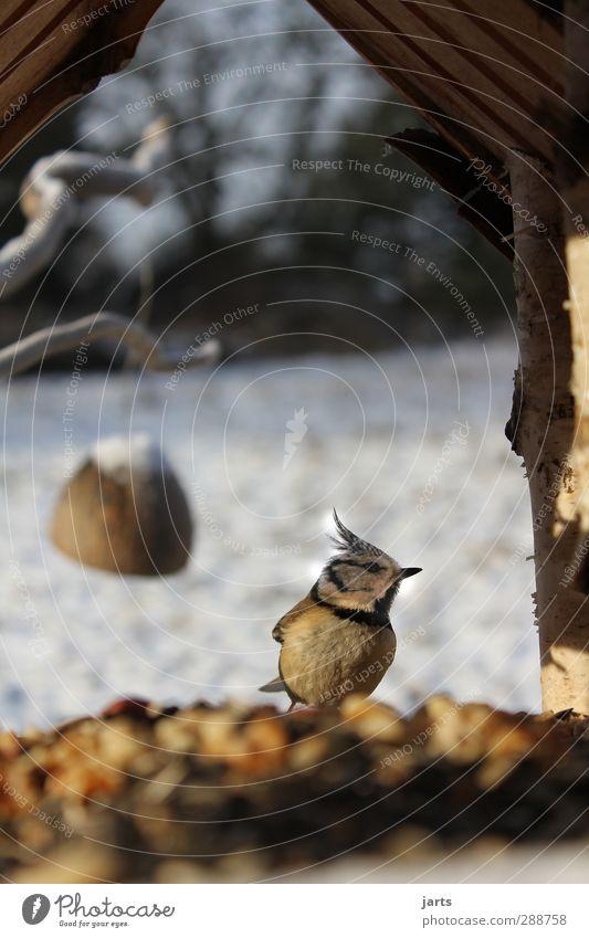 futterstelle Natur Tier Winter Vogel Wildtier Fressen füttern Futterhäuschen