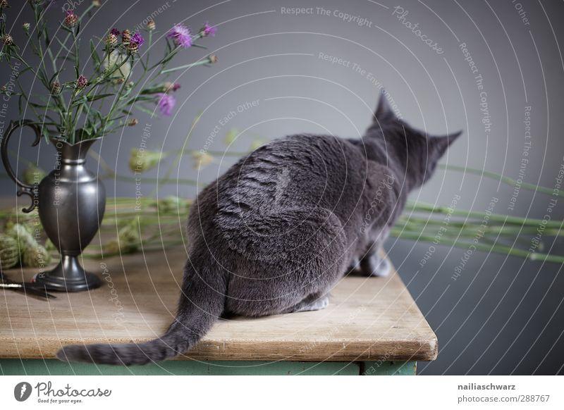 Katze und Distel Tier Haustier 1 Vase Blume Holz Metall Duft hocken liegen Blick sitzen elegant schön Neugier niedlich weich blau grau violett Tierliebe