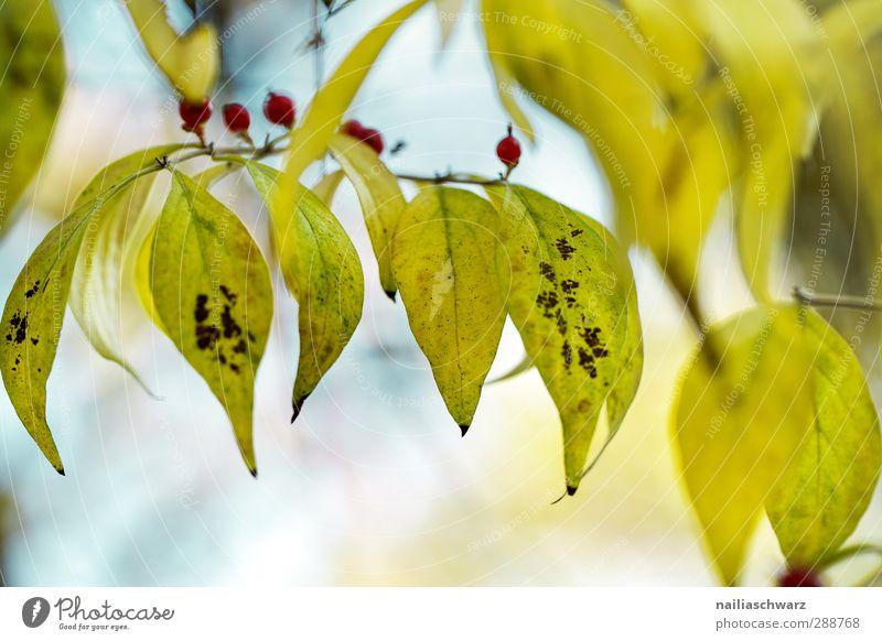 Herbstblätter Natur Pflanze Baum Blatt Grünpflanze Garten Park fallen hängen verblüht natürlich schön blau mehrfarbig gelb grün Fröhlichkeit Romantik Stimmung