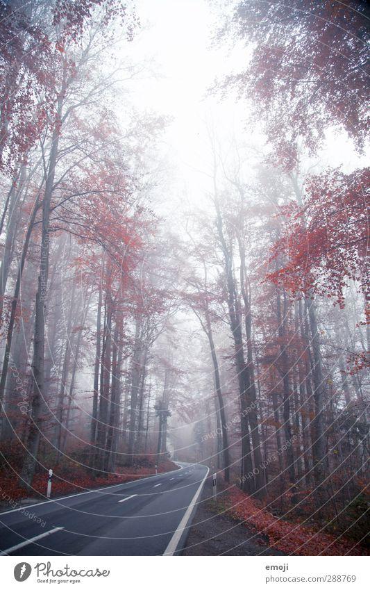 Strasse ins Ungewisse Natur Pflanze Baum rot Winter Landschaft Umwelt Straße Herbst natürlich Nebel schlechtes Wetter