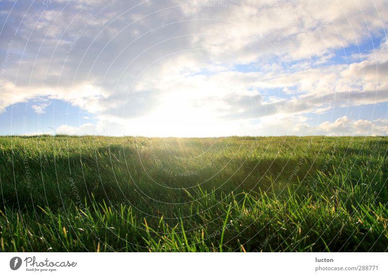 Deichkante Himmel Natur blau Ferien & Urlaub & Reisen grün Sommer Sonne Einsamkeit Wolken ruhig Landschaft gelb Umwelt Herbst Gras Frühling