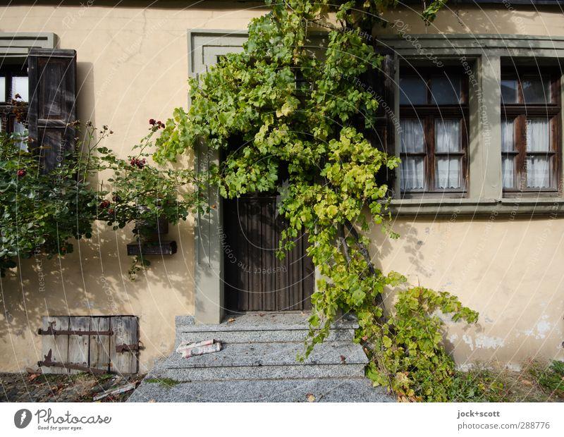 Idylle für Langschläfer Natur schön ruhig Haus Fenster Leben Stein außergewöhnlich Fassade Treppe Tür Häusliches Leben Lifestyle Wachstum