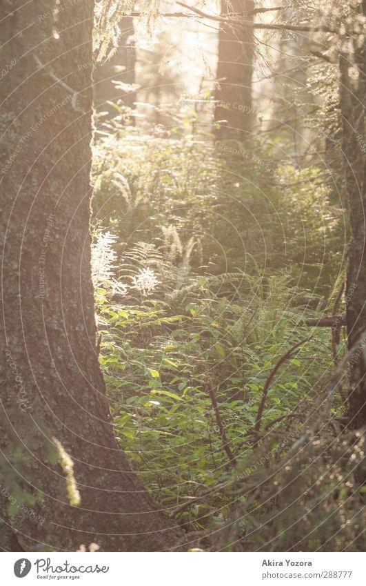 Märchenwald Natur Pflanze grün Sommer Baum Wald gelb Gras natürlich braun Wachstum leuchten Sträucher einzigartig Schönes Wetter Schutz