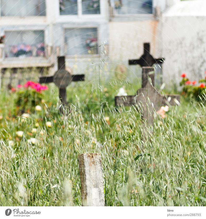 Friedhof ruhig Wiese Tod Gras Traurigkeit Religion & Glaube Wandel & Veränderung Hoffnung Vergänglichkeit Zeichen Christliches Kreuz Vergangenheit Verfall