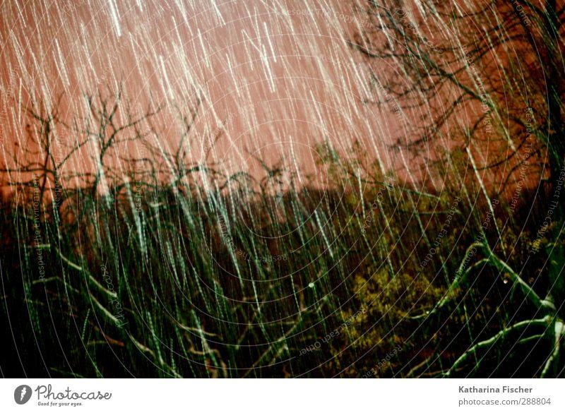 # 288804 Umwelt Natur Pflanze Tier Urelemente Himmel Winter Klima Wetter Sturm Eis Frost Schnee Schneefall Baum fallen braun orange rot schwarz weiß Ast Bild