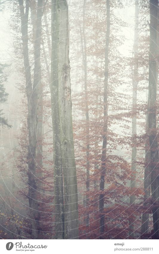 heute gibt's Suppe Natur Baum Landschaft Wald Umwelt kalt Herbst natürlich Nebel Baumstamm schlechtes Wetter