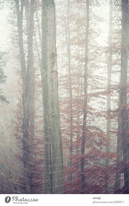 heute gibt's Suppe Umwelt Natur Landschaft Herbst schlechtes Wetter Nebel Baum Wald kalt natürlich Baumstamm Farbfoto Außenaufnahme Menschenleer Tag