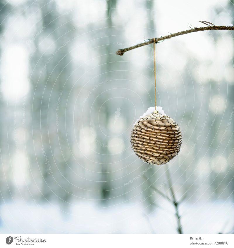 Schmucker Wald IV Natur Weihnachten & Advent Winter Landschaft Wald Schnee Garten Eis glänzend authentisch Frost Lebensfreude hängen Christbaumkugel Vorfreude Weihnachtsdekoration