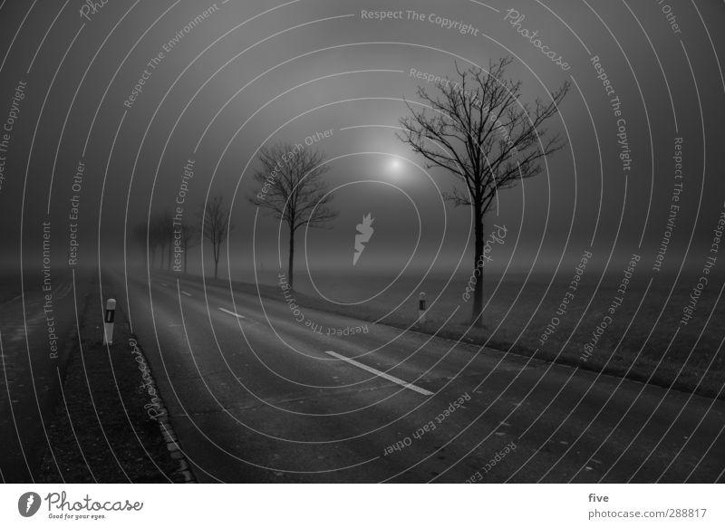 [300] Hell yeah Himmel Natur Pflanze Baum Sonne Einsamkeit Wolken Landschaft Ferne dunkel Wiese kalt Straße Stimmung Feld Nebel