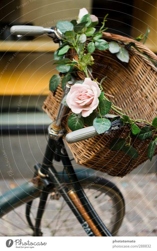 I like my bike! Ferien & Urlaub & Reisen grün Freude feminin Glück braun Stimmung rosa Freizeit & Hobby frei Verkehr Fahrrad Fröhlichkeit Ausflug Lebensfreude