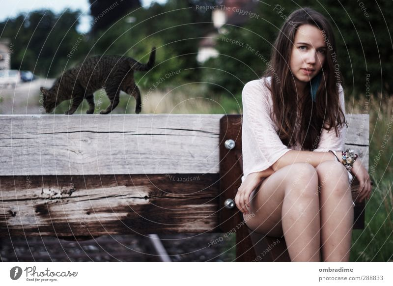 CATS II feminin Junge Frau Jugendliche Erwachsene Leben 1 Mensch 18-30 Jahre Natur Landschaft Sommer Park Haare & Frisuren brünett langhaarig Haustier Katze