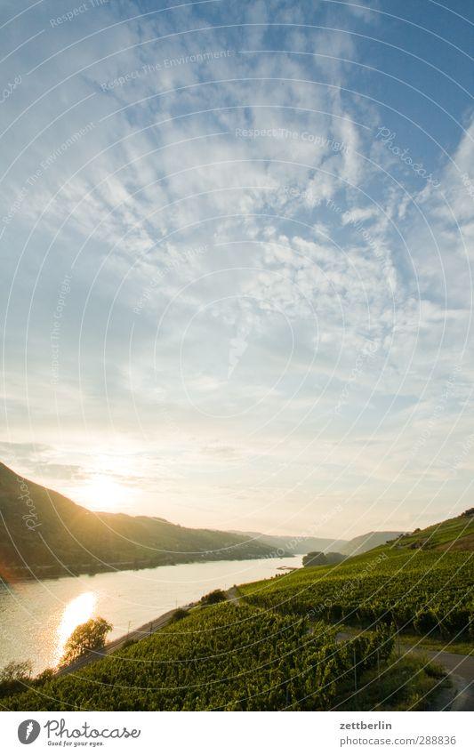 Rhein Ferien & Urlaub & Reisen Umwelt Natur Landschaft Pflanze Wasser Sommer Klima Klimawandel Wetter Schönes Wetter Wiese Feld Hügel Berge u. Gebirge Flussufer