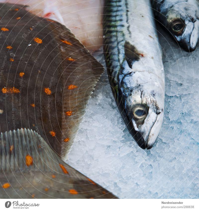 Auf Eis.... Lebensmittel Fisch Meeresfrüchte Bioprodukte Tier Totes Tier Diät genießen rein stagnierend Vergänglichkeit Scholle Frischfisch Makrele Fischmarkt