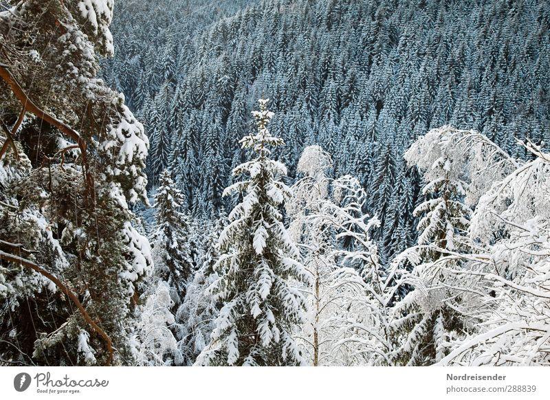 Thüringer Wald Leben Sinnesorgane ruhig Tourismus Winter Winterurlaub Berge u. Gebirge Landwirtschaft Forstwirtschaft Klima Eis Frost Schnee Baum ästhetisch