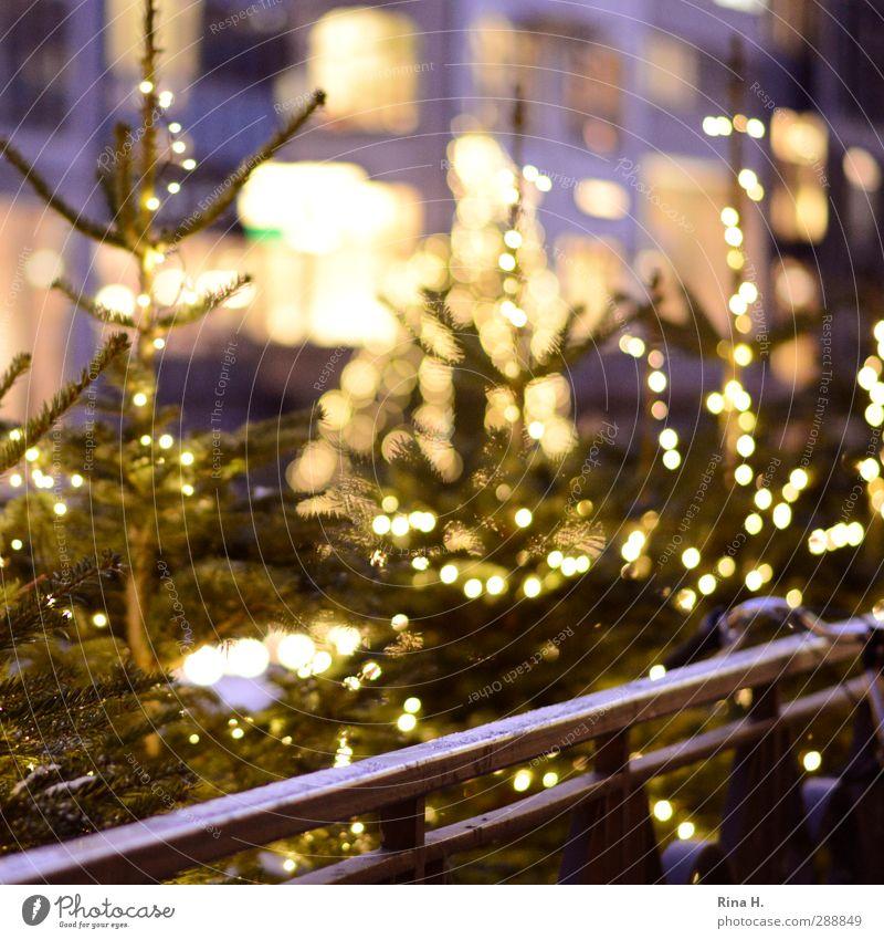 WeihnachtsKlimbim Weihnachten & Advent leuchten Lebensfreude Vorfreude Tanne Weihnachtsbaum Lichterkette Geländer Fahrradlenker Farbfoto Außenaufnahme