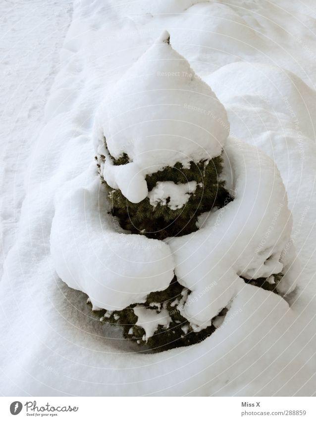 Schneehaufen weiß Baum Winter kalt lustig Eis Frost Tanne Buchsbaum