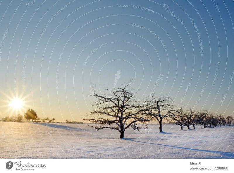 Winterwunderland Landschaft Sonnenaufgang Sonnenuntergang Schönes Wetter Eis Frost Schnee Baum Wiese Feld kalt weiß Stimmung Streuobstwiese Ast Apfelbaum