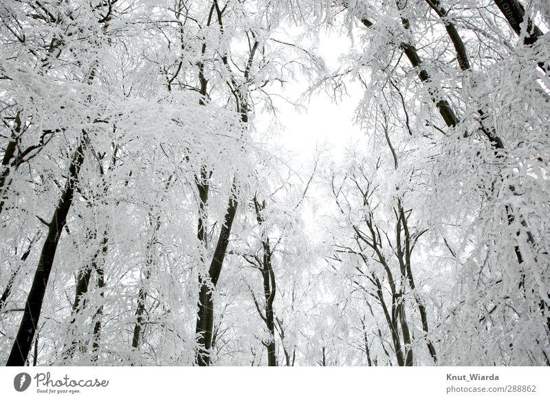 Winter, verschneite Bäume Umwelt Natur Landschaft Himmel Klima Wetter Schnee Baum Wald Holz frieren kalt schön schwarz weiß Winterwald Schneelandschaft Äste