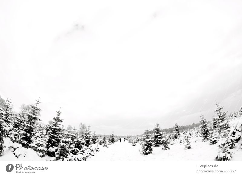 2 Männer auf Tannbaumsuche Mensch Himmel Natur Mann weiß Pflanze Baum Winter Wolken Landschaft schwarz Wald Erwachsene Ferne Umwelt Schnee