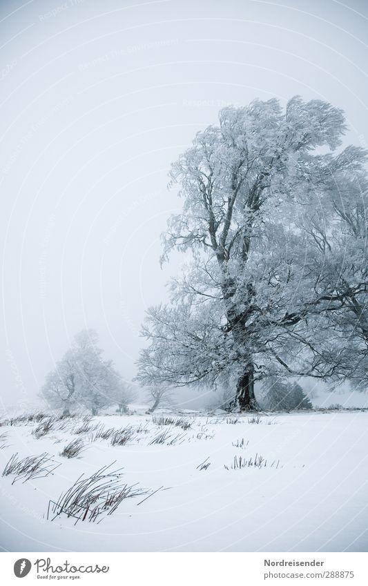 Er wurde gelobt.... Leben ruhig Winterurlaub Natur Landschaft Pflanze Urelemente Klima Wetter Wind Nebel Eis Frost Schnee Baum Wiese frieren alt Gesundheit kalt