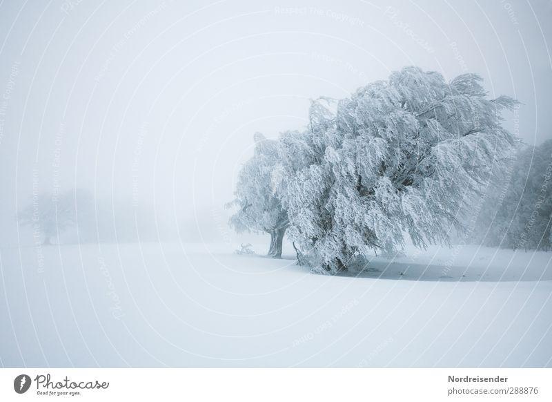 ....Er auch... Natur weiß Pflanze Baum Einsamkeit Winter ruhig Landschaft kalt Schnee Leben Eis Wind Kraft Klima Nebel
