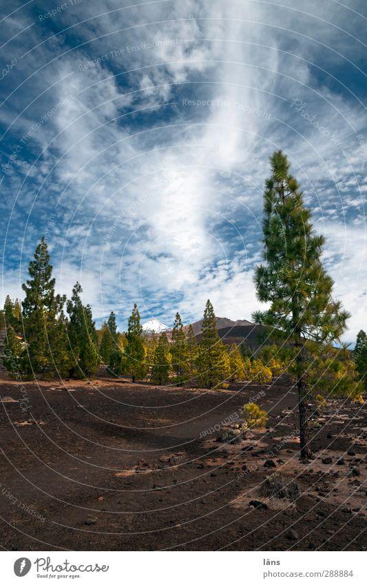 Elementar Umwelt Natur Landschaft Pflanze Urelemente Erde Himmel Wolken Schönes Wetter Baum Berge u. Gebirge Vulkan Stein außergewöhnlich Geröll Teneriffa