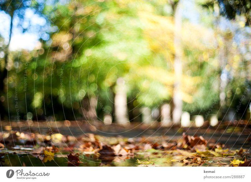 Letztens im Herbst Umwelt Natur Landschaft Pflanze Wasser Sonne Sonnenlicht Schönes Wetter Baum Blatt Grünpflanze Park Pfütze gelb grün herbstlich leer Farbfoto