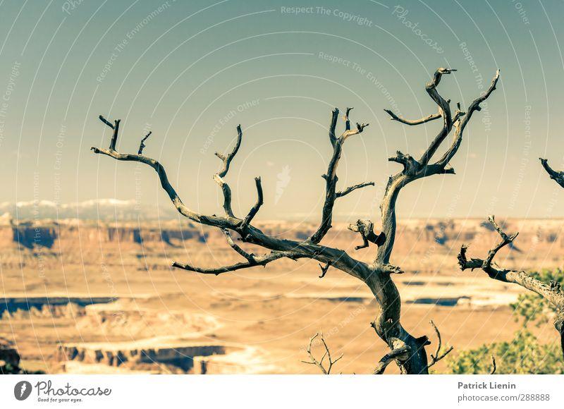 Last Tree Standing Natur Ferien & Urlaub & Reisen Sommer Pflanze Baum Sonne Ferne Umwelt Wärme Herbst Freiheit Tourismus Schönes Wetter Ausflug Abenteuer