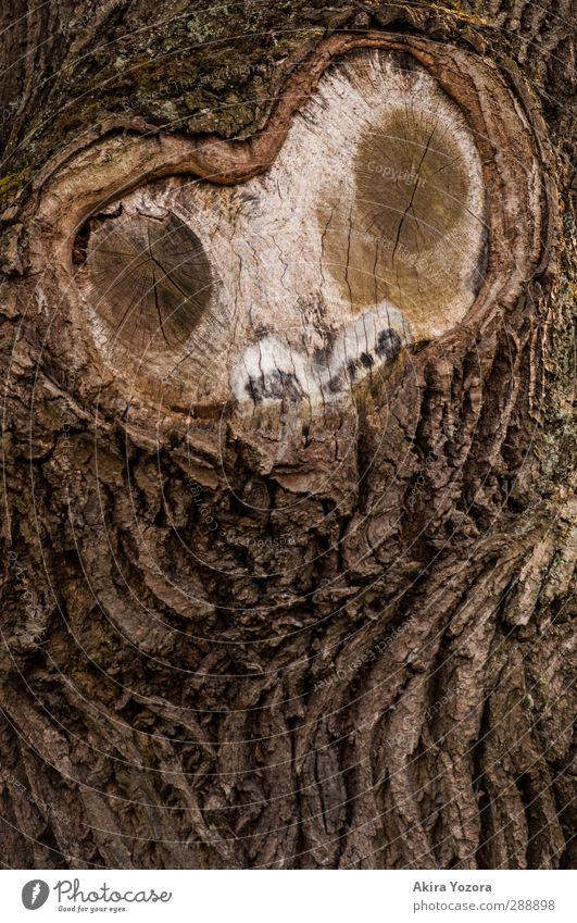 o.O Baum Baumrinde Gesicht beobachten Natur natürlich Blick Wachsamkeit