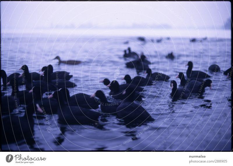 Winter 15120212 Natur Wasser Tier Landschaft Umwelt dunkel kalt Küste Stimmung Kunst Vogel Eis Wellen glänzend Klima Wildtier