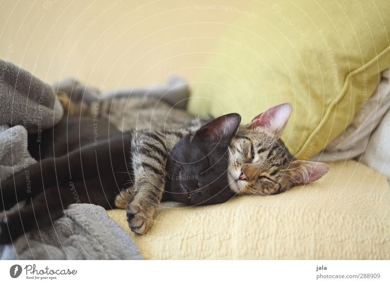 lazy saturday Katze schön Tier liegen Freundschaft Zusammensein Warmherzigkeit schlafen Vertrauen Haustier Geborgenheit Umarmen Sympathie Tierliebe Akzeptanz
