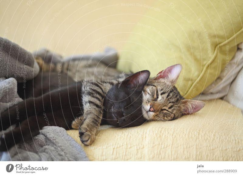 lazy saturday Katze schön Tier liegen Freundschaft Zusammensein Warmherzigkeit schlafen Vertrauen Haustier Geborgenheit Umarmen Sympathie Tierliebe Akzeptanz Einigkeit