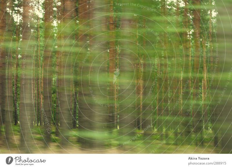 Geschwindigkeitsrausch Natur grün Wald braun fahren Kiefer