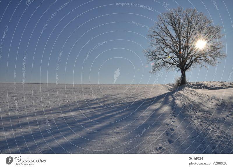 Lieblingsbaum blau Baum Einsamkeit Winter ruhig Landschaft Erholung Umwelt kalt Schnee Horizont Eis Zufriedenheit wandern Schönes Wetter ästhetisch