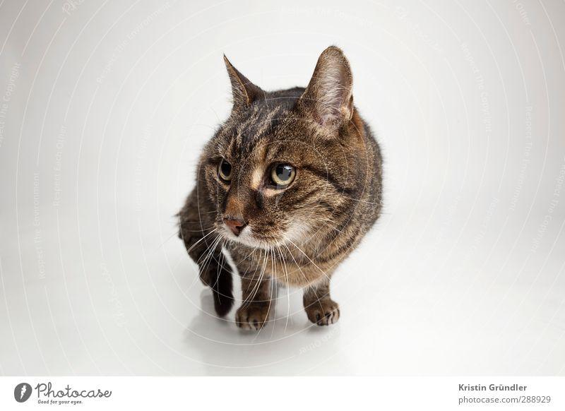 die ängstliche Katze Katze ruhig Tier Liebe Bewegung lustig Freundschaft Häusliches Leben Freizeit & Hobby Angst verrückt genießen Warmherzigkeit Abenteuer sportlich Ohr
