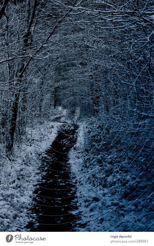Waldweg Natur Pflanze Winter Landschaft Wald Umwelt Wege & Pfade Schneefall Jahreszeiten Umweltschutz Waldspaziergang