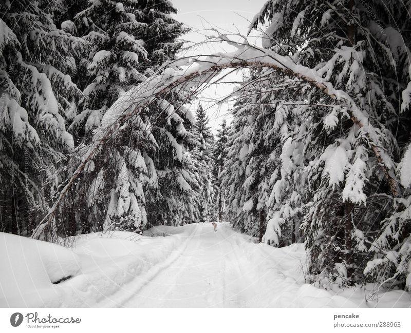 verflixt und zugenäht | festgefroren weiß Baum Winter Wald Schnee Eis Wetter Klima Urelemente Alpen Tor frieren Birke